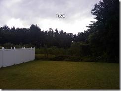 Fuze backyard