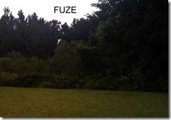 Fuze backyard 100