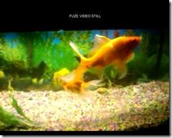 Fuze Video Still